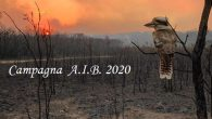 Dal 15 Giuugno al 30 Settembre le nostre squadre operative antincendio saranno impegnate per fronteggiare l'emergenza incendi che ogni anno flagella l nostro paese, una lotta continua contro un avversario […]